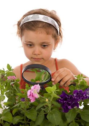 Комнатные растения и ребенок. Опасные и безопасные растения для детской комнаты.